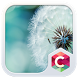 Dandelion CLauncher Theme by CG-Live-Wallpapers