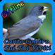 Canto Coleiro Tui Tui Viviti New Offline by Topek App
