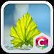 Fresh Leaf Theme by Best Themes Workshop