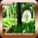 Dandelions Live Wallpaper by Chiron Studio