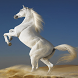 Horses Wallpapers by eciwallpapers
