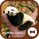 Cute Wallpaper Napping Panda Theme by +HOME by Ateam