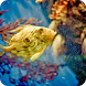 Aquarium Live Wallpaper by AnuTo inc.