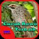 Suara Burung Cucak Rowo Terbaik by Hoki Developer