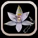NZ Orchid Key