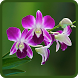 Orchids Live Wallpapers by noppachai