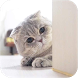 Cat Wallpaper - We love cat by NgonTinh KangKang