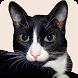 Породы кошек by SUNDEV