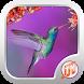 Bird Sounds Ringtones Free by T-M