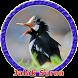 Suara Master Jalak Suren MP3