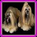 Сможешь угадать породу собак? by Alikaha
