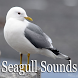 Seagull Sounds by Scorpion King