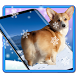 3D Rump Shaking Corgi Dog Theme&Live wallpaper by Dreamy Theme&Wallpaper