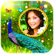 Peacock Photo Frames HD by One key