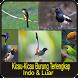 Kicau-Kicau Burung Indo dan Luar Terlengkap
