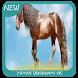 Horses Wallpapers 4K