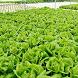 Hydroponick Plant Ideas by mitapp