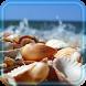 Shells Sea Sand by godsproslw