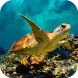 Underwater Sea Turtle 3D LWP by Magic Live Wallpapers