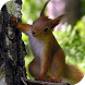 Squirrel Live Wallpaper by Cambreeve