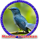 Kicau Burung Tledekan Bambu MP3