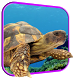 Turtle 3D Live Wallpaper by Wallpapers Studio Pro