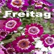 Freitag by Mombrum apps