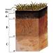 Soil moisture quiz by ScriptBox