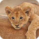 Little Lion Live Wallpaper by WallpapersLove