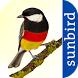 All Birds Germany! by Sunbird Images