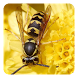 Insects Sounds by SoundWave Apps