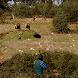 Cazando conejos