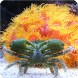 Guide To Salt Water Aquariums by Innervision Web Development