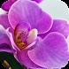 Orchid Wallpapers Free HD by Rumah Kita Studio