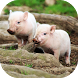 Little Pig Wallpaper by PegasusWallpapers