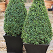 Buxus Wallpapers by vikt