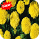 Marigold by Seaweedsoft