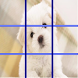 Dog Puzzle 2016 by 小朋友