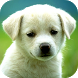 Dog Puzzle by Faimust Software