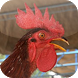 Suara Ayam Ketawa by KicauApp