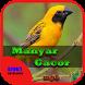 Suara Burung Manyar Gacor by Hoki Developer