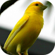 Bird Singing: Canary by BR Android Inc.
