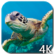 Turtle 4K Video Live Wallpaper by Hubert Apps
