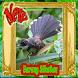 Burung Sikatan Termerdu dan Terbaik by CaolaDev