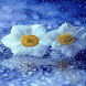 Flowers In Rain LWP