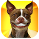 Grin Dogs Smile Live Wallpaper by Happy Friday
