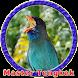 Masteran Tengkek Buto MP3