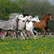 Horses Jigsaw Puzzles by borzoapps