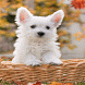 Small Puppy Live Wallpaper by Daksh Apps