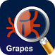 MyPestGuide Grapes by Department of Agriculture and Food WA